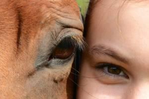 Therapie mit dem Pferd1